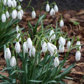 Der Frühling erwacht!