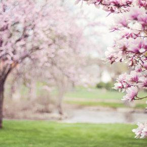 Warum ist der Frühling so besonders?