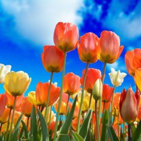 Pflanzen im Frühling - Welche sollte man meiden?